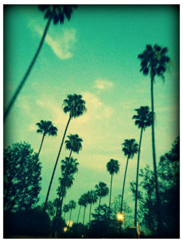 loving california palms...