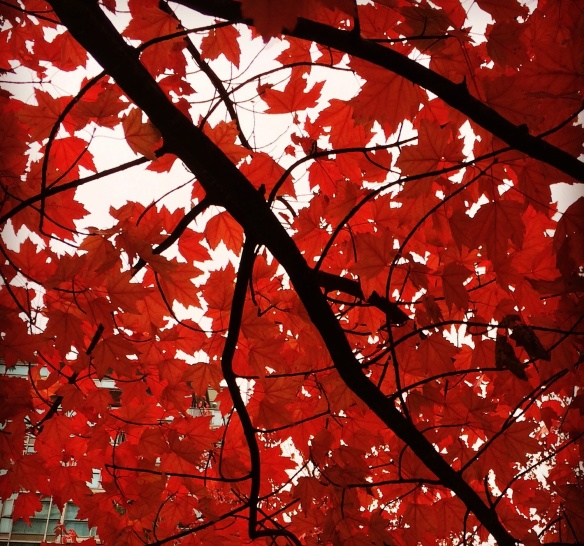 Beautiful red October leaves