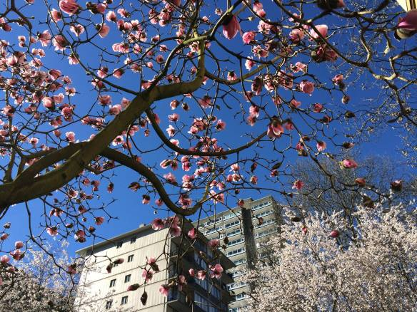 more blossoms in my 'hood